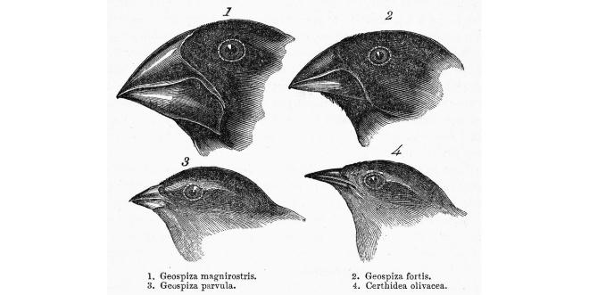 darwin-galapagos-finches-granger